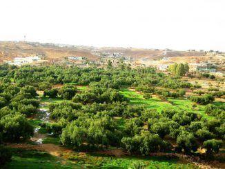 وادي بن وليد